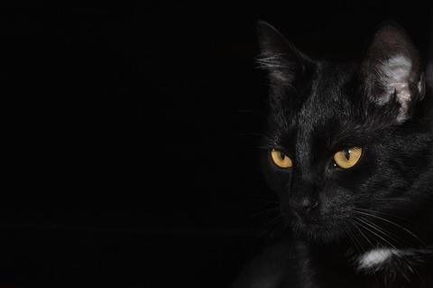 cat-1507600_640