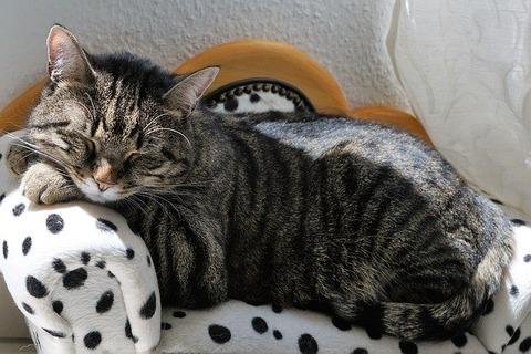 cat-2439131_640