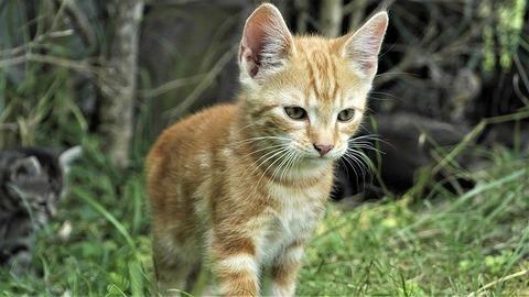 cat-4978078_640