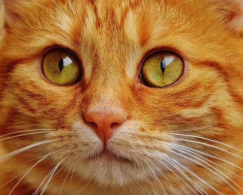 cat-1652880_640