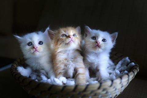 cat-3266675_640