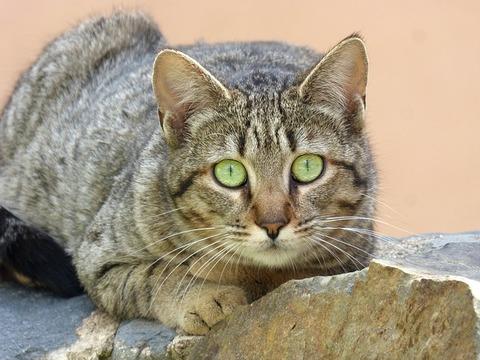 cat-3335621_640