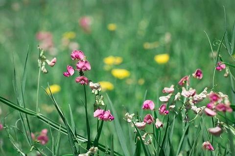 meadow-1605551_640