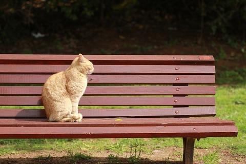 cat-4100462_640
