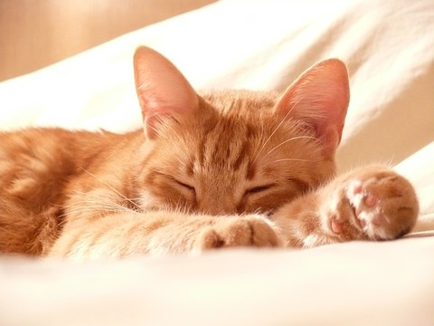 cat-1558711_640