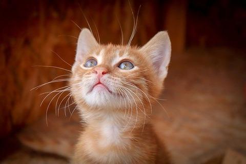 cat-3777201_640