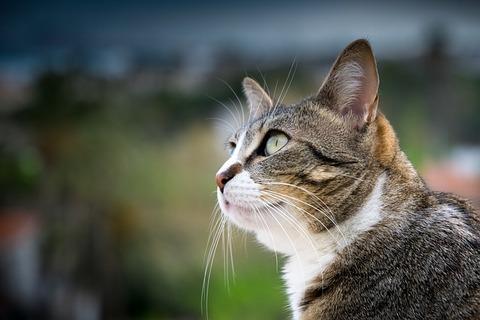 cat-3326165_640