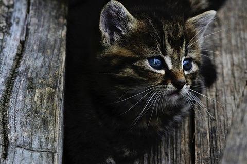 cat-914110_640