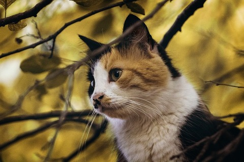 cats-2830769_640