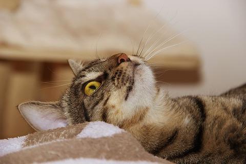 cat-3506295_640