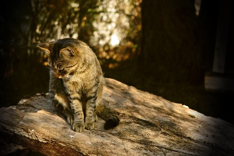 cat-4144350_640