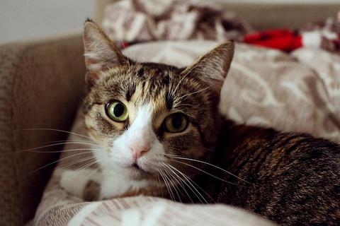 cat-2858060_640