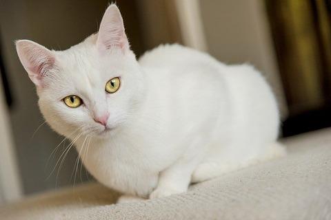 アニメ「白猫プロジェクト ZERO CHRONICLE」第8話が話題!感想・反応まとめ【ゼロクロ】