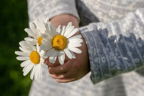 daisies-3482335_640