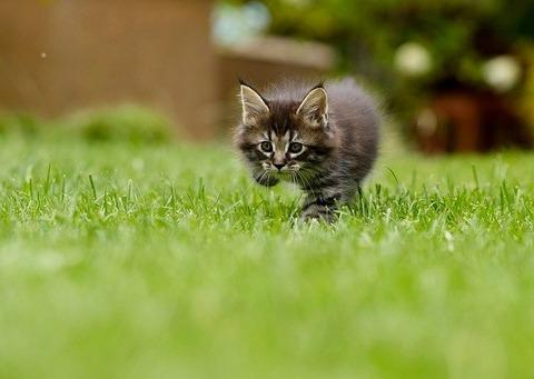 cat-4419763_640