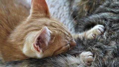 cat-4951972_640