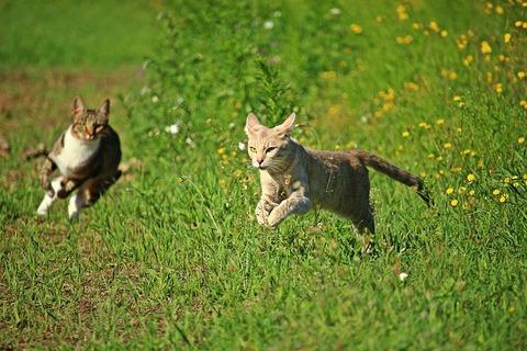 cat-2615700_640