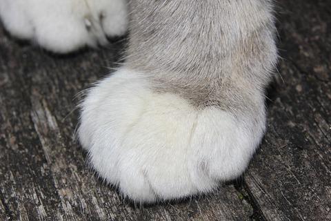 cat-379118_640
