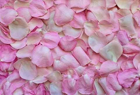 rose-petals-3194062_640