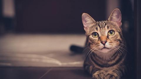 cat-1246736_640