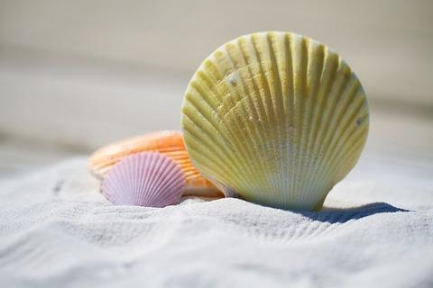 shells-792912_640