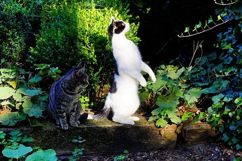 【動画】「ウチの店に来る野良猫が可愛い件」…反応まとめ