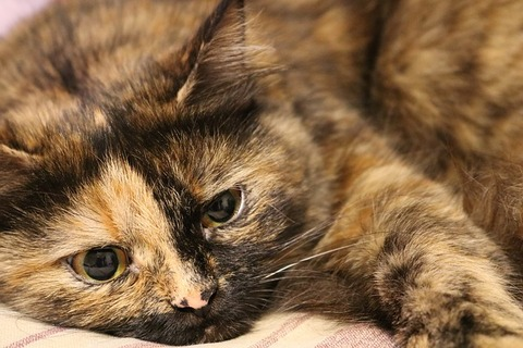 cat-3416713_640