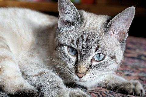 cat-3000316_640