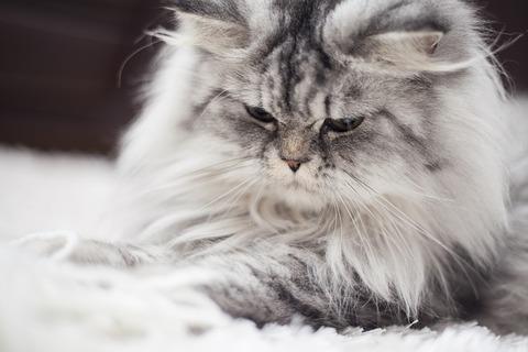 cat-2579989_640