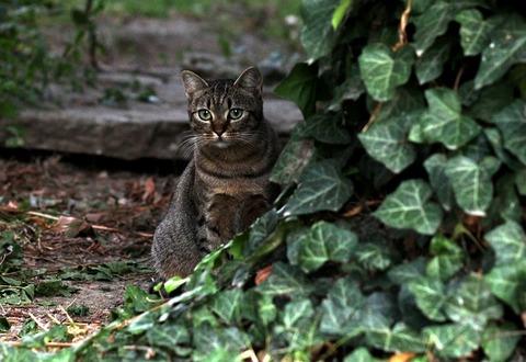 cat-2764889_640