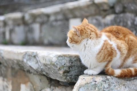 cat-703341_640