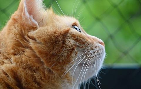 cat-3823082_640