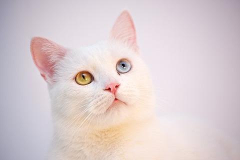 cat-3593021_640