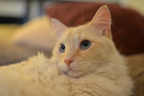 cat-560321_640