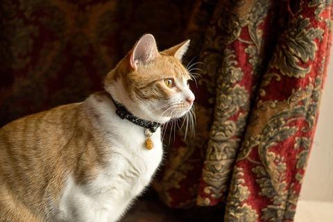 cat-1877279_640