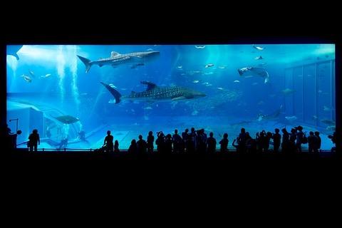 aquarium-725798_640