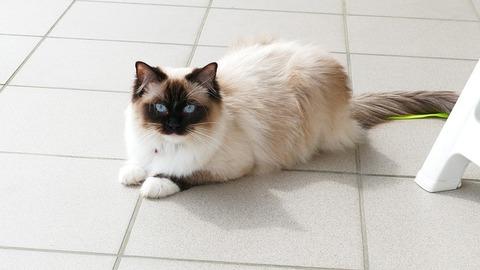 cat-4083215_640