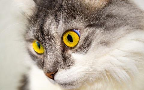cat-76116_640