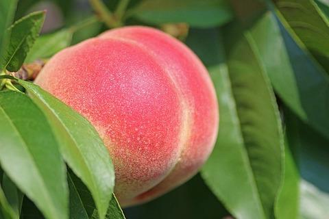 peach-2721852_640