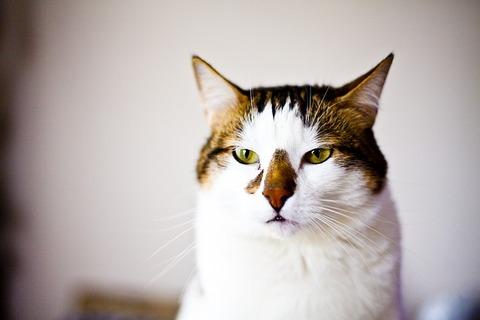 cat-862512_640