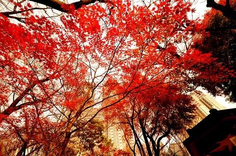 autumnal-leaves-2380617_640