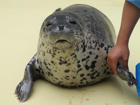 seal-2689197_640
