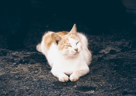 kitten-sleeping-2079845_640