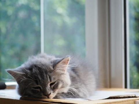 cat-2209105_640