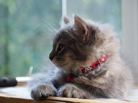 cat-2209109_640