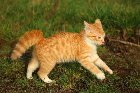 kitten-1075168_640