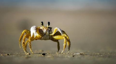 crab-1990198_640
