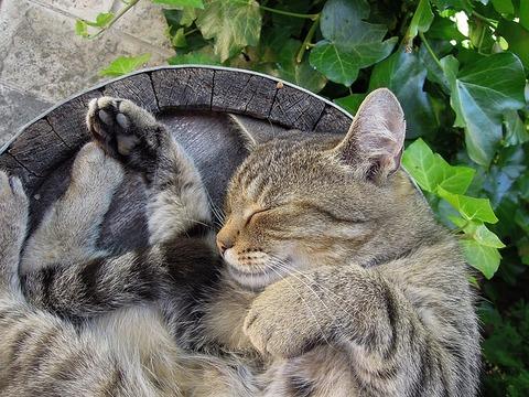 cat-2395102_640