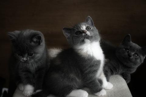 cat-2575694_640