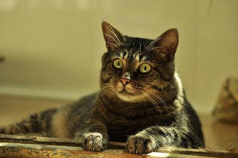 cat-4346491_640